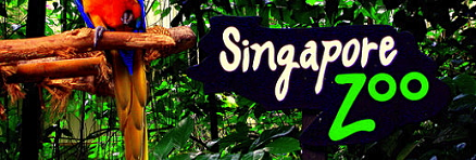 Singapore zoo photo Singapore Zoo | How To Create A Memorable Family Experience